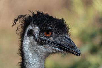 Portrait of a cute ostrich