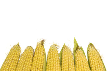 Fresh corns isolated on white background with copy space