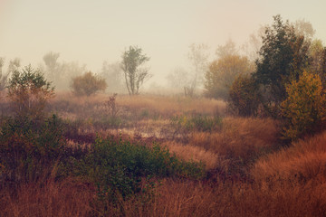 Autumn foggy landscape with colorful red bushes and meadow in the morning