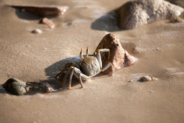 Crab is running on the beach, wet sand