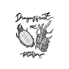 Dragonfruit monochrome vector illustration.