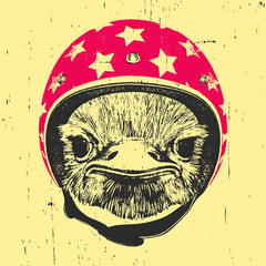 Portrait of Ostrich with helmet, hand-drawn illustration, vector