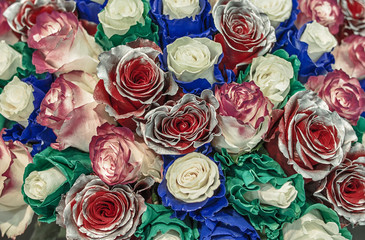 Bouquet of unusual roses. Flowers chameleons with blue and green petals along the edges and the red roses with silver coloring of the petals