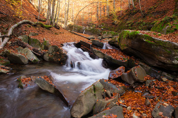 Magnificent view of the waterfall in the Autumn Beech Forest in Europe