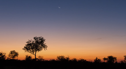 Lovely sunset in Kruger national park with tree silhouette and bright colours