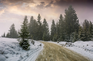 road through foggy spruce forest in winter. lovely nature scenery