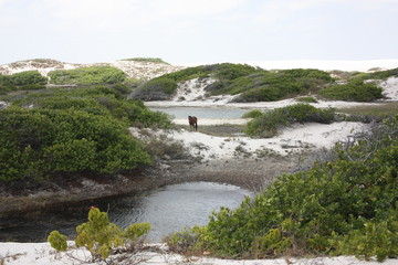 Oasis Baixa Grande, Parc National des Lençois (dunes) du Maranhao, Brésil