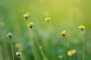 Fototapete - Flower Grass blur Fresh green grass (shallow DoF)  Natural green plants landscape using as a background or wallpaper