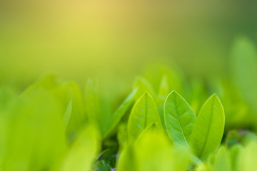 Fototapete - Leaves blur Fresh green grass (shallow DoF)  Natural green plants landscape using as a background or wallpaper