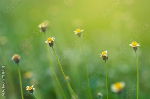 Wall mural Flower Grass blur Fresh green grass (shallow DoF)  Natural green plants landscape using as a background or wallpaper