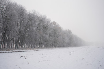 Fog on the field in a winter forest, mysterious atmosphere