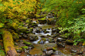 A small mountain creek flows among stones and autumn trees in the forest. Mouse Creek, Gifford Pinchot National Forest, Washington, USA Pacific Northwest.