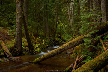A small mountain creek flows in the dark forest. Panther Creek, Gifford Pinchot National Forest, Washington, USA Pacific Northwest.
