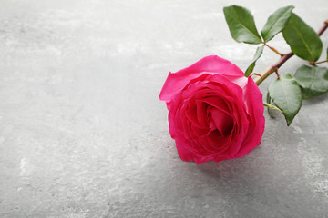 Beautiful pink rose on grey wooden table