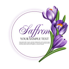 Round label card or invitation card with saffron flowers. Vector illustration with a bouquet of crocuses.
