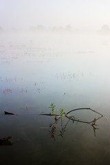 Summer landscape with river. Branch with green leaves in water. Heavy fog on cold morning