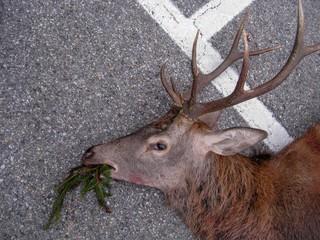Poster Hunting deer