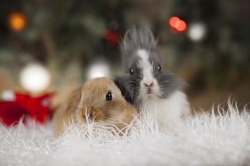 Animal, Rabbit, bunny on Christmas background