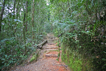 Thick and lush green jungle path