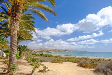 Beach Costa Calma on the Canary Island Fuerteventura, Spain.
