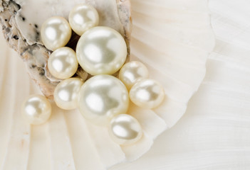 Pearls in sea shell close up