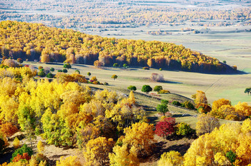 autumn landscapes of Bashang plateau/ autumn landscapes of meadows steppe