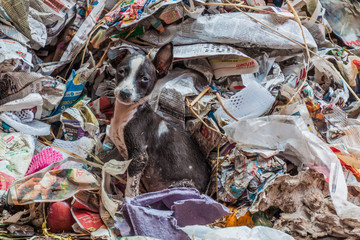 KOLKATA, INDIA - OCTOBER 31, 2016: Stray dog in a garbage at New Market in Kolkata, India Papier Peint