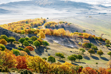 autumn landscapes of Bashang plateau/ autumn landscapes of meadows steppe