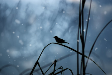 One lone bird is on a leaf in winter.