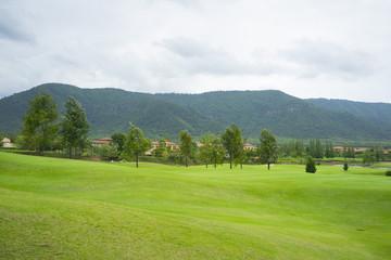 beautiful green grass of golf course