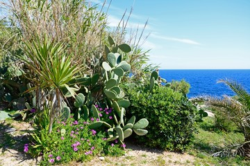 View of Mediterranean plants on the cliff tops with views out to sea, Blue Grotto, Malta.