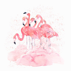 Watercolor flamingos with splash. Hand drawn isolated illustration