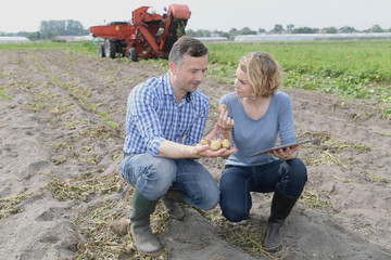 Farmers analysed the potato crop in the field on a digital tablet