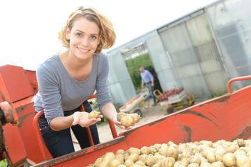 Fototapeta Farmers analysed the harvesting in the field on a digital tablet obraz