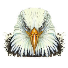 watercolor picture of an animal genus of large birds of the hawk family, eagle, predator, portrait of an eagle, white eagle with a yellow beak, feathers, white background for decoration and embroidery