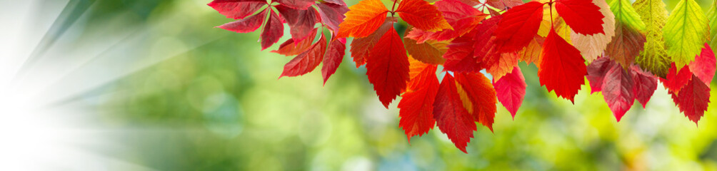 image of autumn leaves close-up