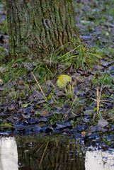 nature photography in a city Park with a shallow depth of field\ nature photography in the Park\blurred background, urban nature, manual focus