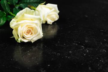 White roses background.
