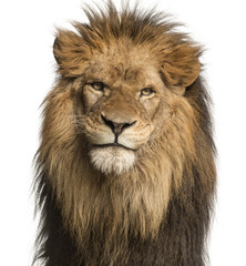 Foto auf Leinwand Löwe Close-up of a Lion facing, Panthera Leo, 10 years old, isolated on white
