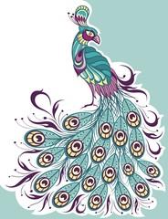 Peacock , sketch vector. animal wildlife illustration.