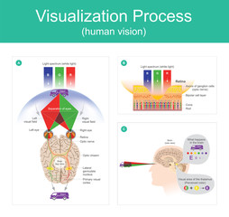 Visualization Process human vision.