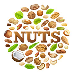 Poster of nuts food grains  of cashew and brazilian nut, coconut and cedar, hazelnut and cashew, almonds and walnut, nutmeg and pecan, peanut and macadamia, pistachio.