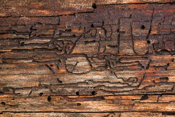photo close-up of wood, damaged by termites