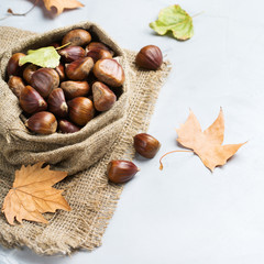 Harvest fall autumn concept. Ripe raw chestnuts in canvas bag