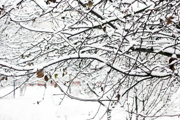 Tree in the snow close-up. Winter and snow. First snow. Beautiful tree. Cold. Frost. White