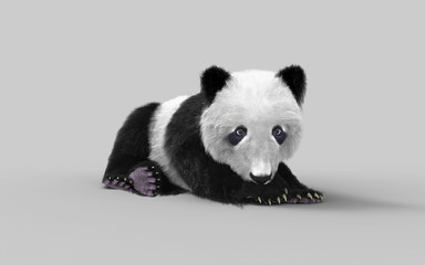 3d illustration panda isolated on white background with clipping path, a cute panda bear.