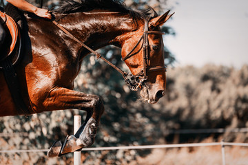 Picture of riding horse jumping over obstacle