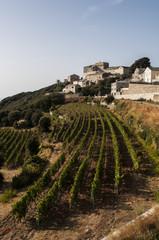 Corsica, Alta Corsica, 29/08/2017: skyline e vista dei vigneti di Baragogna, uno dei villaggi del versante ovest di Capo Corso sulla strada tortuosa che sale fra Morsiglia e Centuri