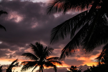 Palm Trees in the Setting Sun