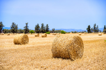 Hay rolls on the field with mountain view
